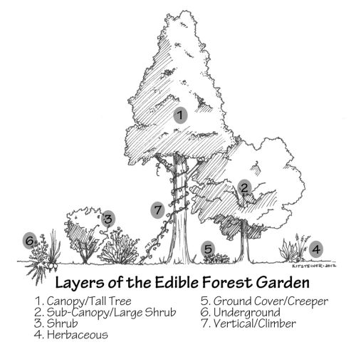 Forest_Garden_Labeled